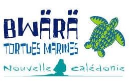 Association tortues marines